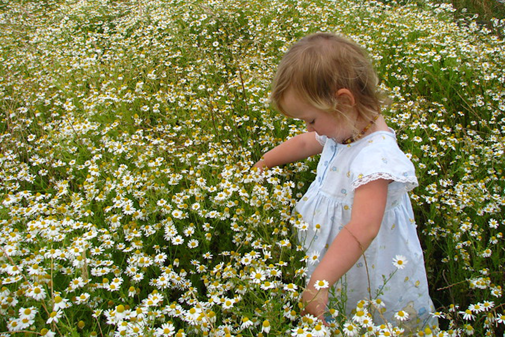 baby in field of chamomile