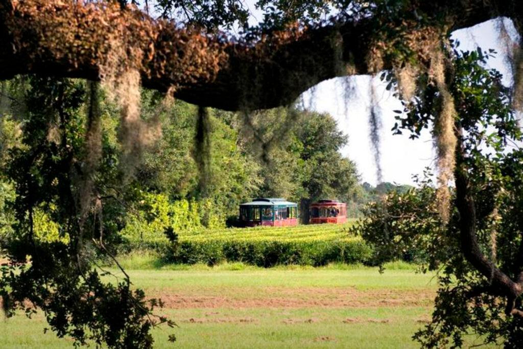 Charleston Tea garden with trolley tour
