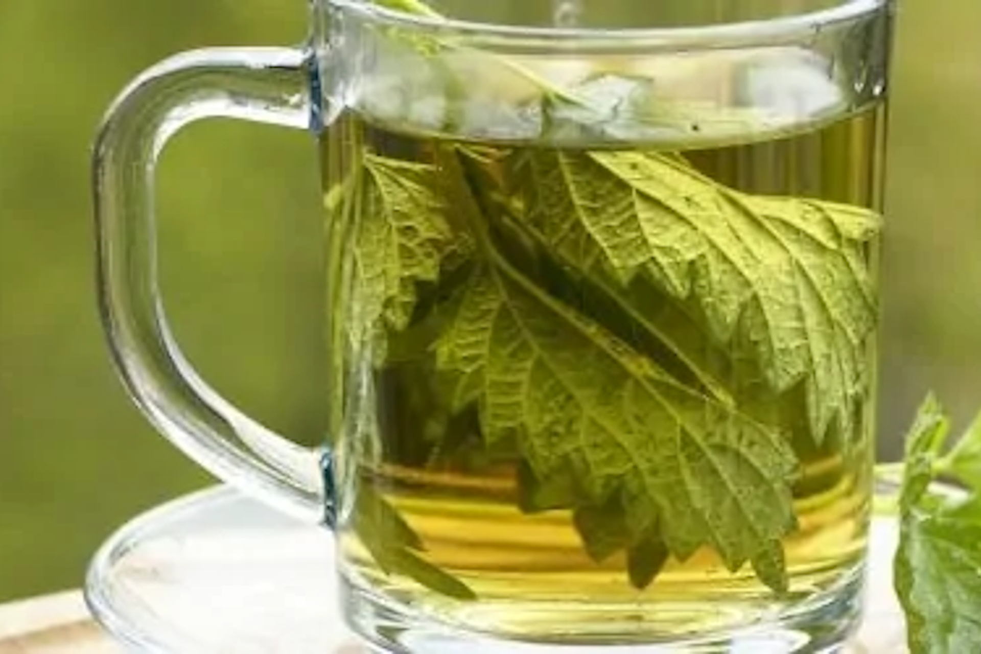 fight arthritis pain with nettle tea