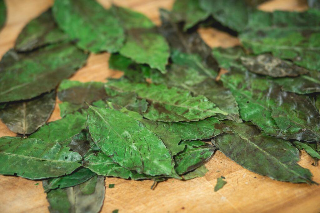 Unprocessed tea leaves