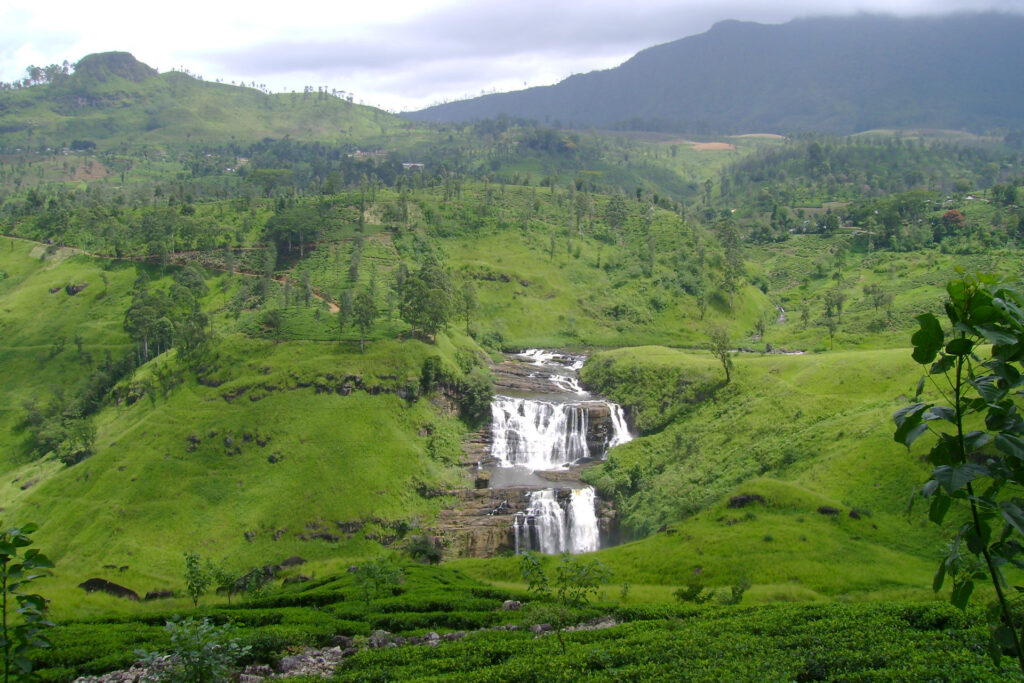 Tea plantation of Nuwara Eliya