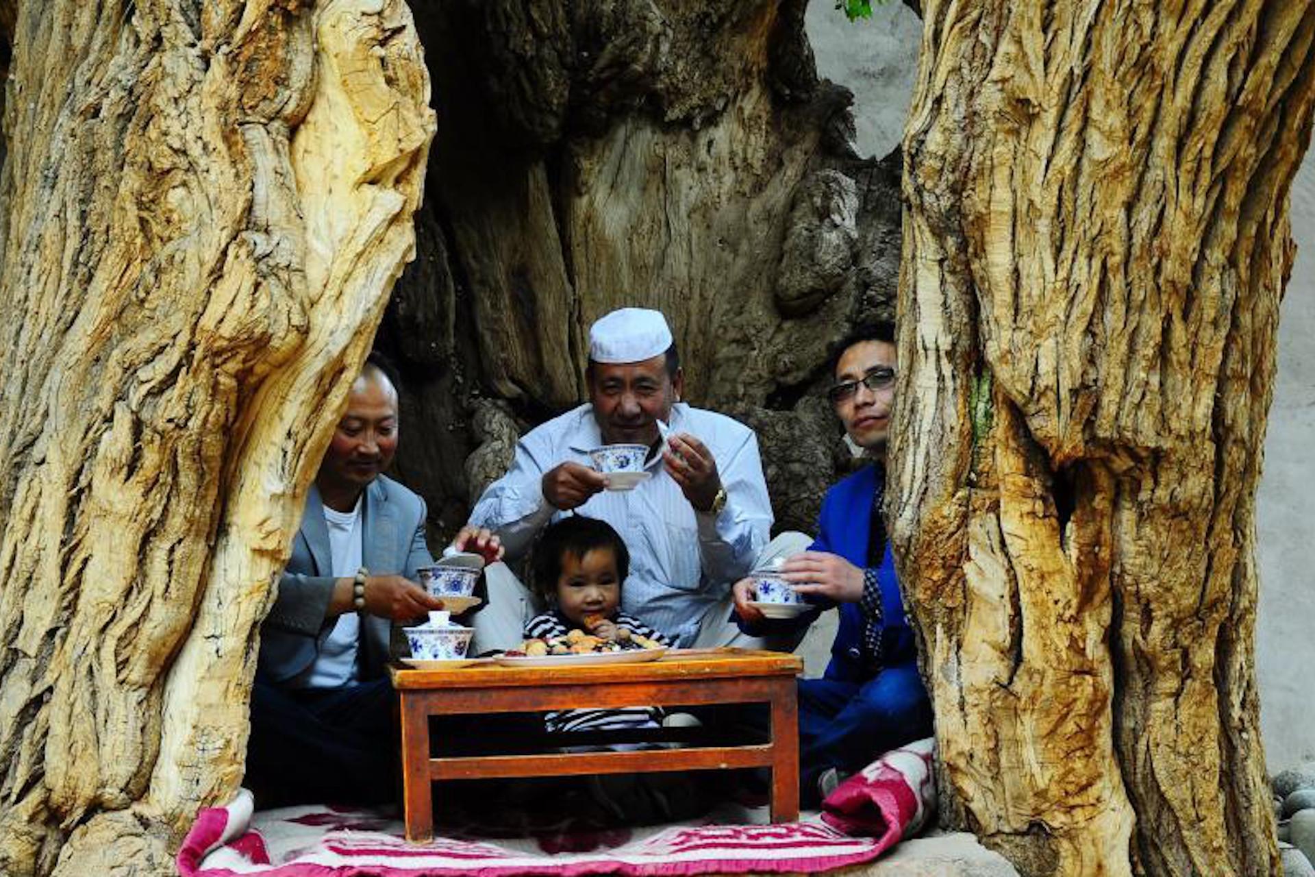 tea table in tree