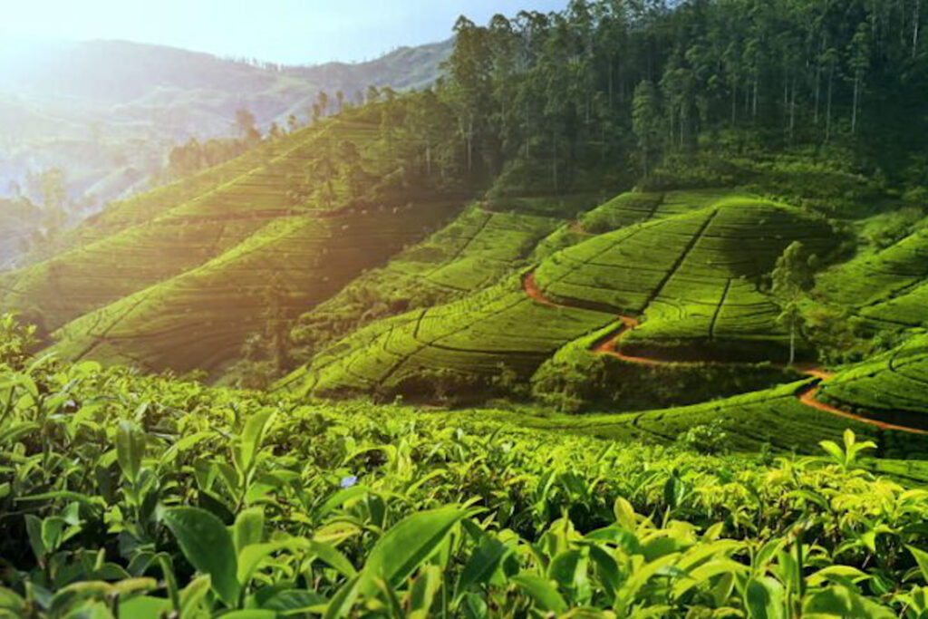 Valpari Tea estates